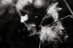 B&W (JPetrovi) Tags: blackandwhite white black nature outdoor background