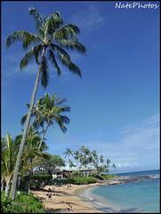 Napili Palm(1) (NatePhotos) Tags: road sunset sea hawaii bay waterfall rainbow cows turtle maui hana jungle waterfalls kapalua rooster eel napili 2016 natephotos
