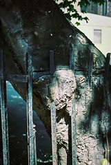 0093_04 (www.cjo.info) Tags: 35mm cowgate edinburgh europe europeanunion kodak kodakportra160 oldtown pentax pentaxist pentaxk slr smcpentaxda40mmf28xs scotland unitedkingdom westerneurope analogue autofocus bayonet citycenter decay film flora iron ironwork metal plant railings tree urban wroughtiron