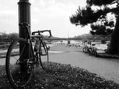 (jun.skywalker (enishi hand made cyclecap)) Tags:    kyoto japan bw  enishi bike bicycle roadbike
