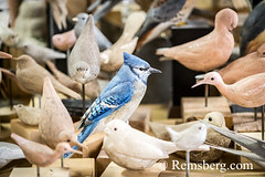 Hand-carved birds in an artist's studio in Pennsylvania. (Remsberg Photos) Tags: art artist bird carver studio wildlife wood pennsylvania bluejay lifelike realistic craft stahlstown usa