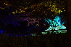 _MG_4838.jpg (Tibor Kovacs) Tags: night colours tree vivid australia events sydney projections light