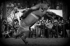 Calixto Clavijo (Eduardo Amorim) Tags: gacho gachos gaucho gauchos cavalos caballos horses chevaux cavalli pferde caballo horse cheval cavallo pferd crioulo criollo crioulos criollos cavalocrioulo cavaloscrioulos caballocriollo caballoscriollos pampa campanha fronteira uruguaiana riograndedosul brsil brasil sudamrica sdamerika suramrica amricadosul southamerica amriquedusud americameridionale amricadelsur americadelsud cavalo         hst hest hevonen  brazil eduardoamorim jineteada gineteada