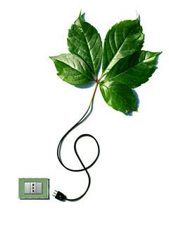 photosynthesis (brescia, italy)