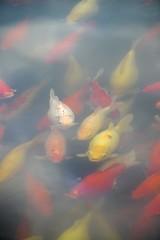 Outside Sanssouci, Germany (nielsenjeanette449) Tags: sanssouci germany tyskland fisk fish colours farver
