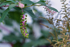 Flower (TM Photography Vision) Tags: sony 850 alpha zeiss 135 18 sonar macro makro pflanze natur landscape garten basel riehen schweiz