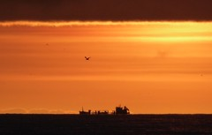 Distant Ship and Seagulls (chdphd) Tags: aberdeenshire stonehaven kincardineshire explored