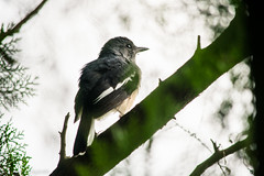 || Winter is Here || (NahidHasan95) Tags: bird wildlife wildbird winter eye green nature bangladesh outdoor animal lastlight sunlight