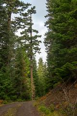DSCF4283 (LEo Spizzirri) Tags: bevin morgan peter odin huck huckleberry shug cabin northwest seattle forest pacific mushroom moss josh betsy ladder green thick