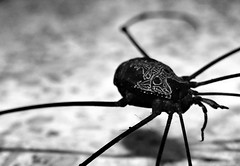 mscara (leusbandeiraus) Tags: pretoebranco aranha