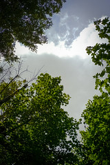 Green leaves and sky (Sacha 2D) Tags: voyage leica italy europe tuscany toscane italie 2014 travelphotography leicam8 leicaelmaritm28mmf28 lensblr photographersontumblr sacha2d