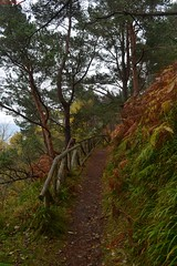 Path up  Sutor's Hill (percy67) Tags: trees nature landscape scotland nikon path d3100