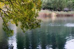 beginning of autumn (turntable00000) Tags: park autumn color bird water yellow leaf pond mitaka kichijoji takashi inokashira 2014 musashino kitajima
