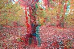 Mitch in the Bosque (CaptDanger) Tags: blue red newmexico america canon photography 3d albuquerque anaglyph bosque redblue 3dglasses americansouthwest 3dimensional 3deffect 3dimages fallpictures 3dimage 3dtrees seasonfall 3dpicture anaglyph3d anaglyphglasses 3dglassesrequired treesinthefall albuquerquebosque southweasternus 3dpicturesnewmexico 3dfallpictures fallin3d redblueglassesneeded modelin3d bosquein3d