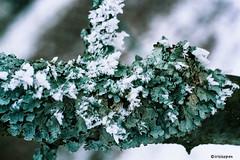 Weiss-Grun #  - 007_3A - Leica R9 Agfa Color400 - 2006 (irisisopen *f/8* <2015>) Tags: leica color colour film 400 agfa farbe r9 negativfilm colornegativ irirsisopen