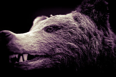 Stuffed Bear (Tuomo Lindfors) Tags: bear stuffed karhu kiuruvesi tytetty kiuruvedenkulttuuritalo kiuruvesiculturehouse
