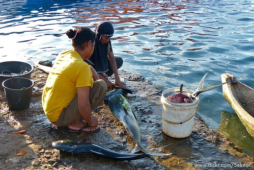 Cleaning the morning catch at Pelabuhan Baranusa, Pantar NTT Indonesia