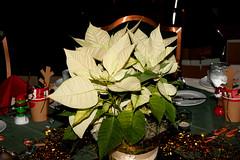 2014 GAA Staff Holiday Party (6) (tommaync) Tags: christmas party people holiday nc nikon december northcarolina staff chapelhill unc 2014 gaa d40 generalalumniassociation theuniversityofnorthcarolina georgewattshillalumnicenter gwhac