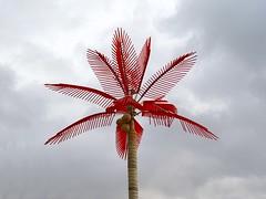 LDSC00970 Palm tree (Tery14) Tags: tree palm sicily palma palmiye palme kelapa sicilia siracusa palmier paume nikau palmo tangan palad palmwydd dlan kmmen handflche palmis telapak kaft palema dabino pailme kanjedza lfa ootimirah kiganja drofia