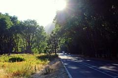 (Stephanie DiCarlo) Tags: california road street trees sky sunlight mountain mountains nature nationalpark hike yosemite yosemitenationalpark