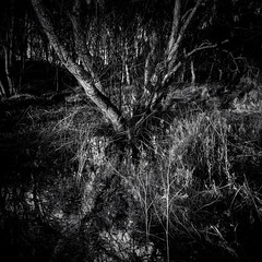 Ascendance.jpg (Dylan Nardini) Tags: trees winter sea beach water forest scotland fife sands 2014 tentsmuir