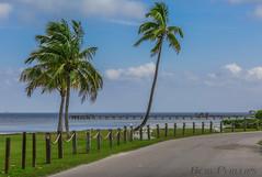 Bokeelia (tropicdiver) Tags: gulfofmexico pier florida palmtrees pineislandsound bokeelia