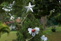 DSC05774 (oliveplum) Tags: christmas star singapore sony decoration hortpark leica60f28macro