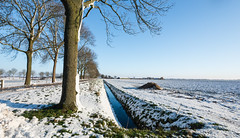 Dutch winter landscape (RuudMorijn) Tags: road blue trees winter sky white snow cold tree texture ice nature netherlands dutch field weather rural season landscape outside outdoors countryside frozen bomen stream view ditch flat natural outdoor snowy earth bare country farming seasonal scenic ground nobody scene row farmland boom soil covered land layer agriculture typical kale brabant winters hemel agricultural weg sloot noordbrabant rij platteland cultivated bomenrij zonnig landelijk agrarisch akker lagezwaluwe winterdag sneeuws besneeuwd agricultuur besneeuwde gemeentedrimmelen dirkdebotsdijk sneeuwlaag