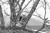 squirrel_net (peter pirker) Tags: winter cold macro animal canon austria österreich squirrel natur kärnten carinthia kalt eichörnchen tier seeboden peterfoto eos550d peterpirker