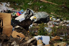 Eagles in a Dump (Vegan Butterfly) Tags: bird animal trash garbage sad eagle bald environmental dump messy environment filth filthy environmentalism