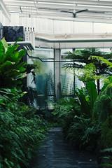 (lindseykusterman) Tags: plants green minnesota stpaul ps conservatory tropical lush