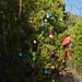 Trees_of_Loop_360_2014_094