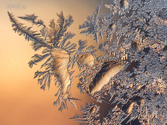 Frost # 42 (claudiaulrikegoodall) Tags:
