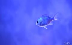 (Sarah-Vie) Tags: aquarium poisson dsc0140 poissondaquarium