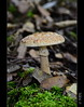 Màgic (PCB75) Tags: mushroom mira foret seta champignon pilz setas bosc magia гриб bolets bolet schwammerl 蘑菇 onddo màgic μανιτάρι goita