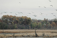 Why We Go to Michigan Audubon's CraneFest (joeldinda) Tags: 2005 autumn sky bird fall colors forest woods nikon d70 nikond70 michigan swamp marsh bog sandhill sandhillcrane audubon bakersanctuary cranefest bigmarshlake cranefestival kiwanisyouthconservationarea