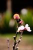 Bokeh Flower (Aaron Cameras) Tags: naturaleza flower nature closeup mexico lights nikon raw bokeh trendy amateur chiapas flickrexplore gygo digitalrev d7000 thegalleryoffinephotography froknowsphoto fronation