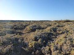 ai piedi del deserto  (56) (Naturalmentescienza) Tags: fiume acacia aquila salicornia spinosa madrepore