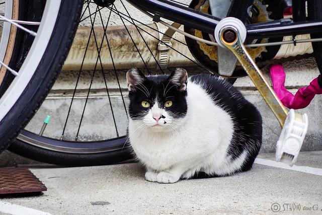 Today's Cat@2015-01-22