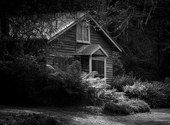 A cabin in the woods (Trace Connolly) Tags: trees light blackandwhite bw house nature forest landscape nationalpark cabin australia ferns greatoceanroad lorne cottages naturephotography canon28135mm monochromephotography otwayrangesnationalpark canon7d allenvalecottages