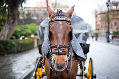 Look at me (fernando_gm) Tags: street travel portrait horse color colour 35mm caballo calle sevilla spain fuji retrato f14 seville depthoffield fujifilm airelibre enfoqueselectivo