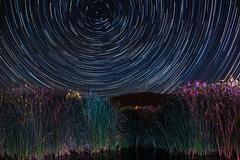 (Mariah Mckenzie) Tags: tree night canon star desert joshua trail astrophotography 7d mkii
