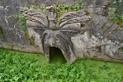 el comedor del estanque (lourdestorreira) Tags: musgo verde agua escultura estanque algas sucio