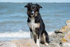 FAN_5708.jpg (Flemming Andersen) Tags: dogs water denmark seaside spring hund dk hurup nykbingmors northdenmarkregion