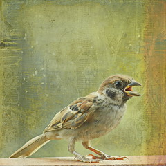 Sparrow (ulli_p) Tags: light macro green bird art texture nature thailand asia southeastasia colours sparrow textured isan aworkofart flickraward texturedphoto ruralthailand awardtree artofimages exoticimage canoneoskissx5