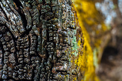 Oye, Tronco!!! (Walimai.photo) Tags: log tronco wood madera nikon d7000 helios 44m4 estacin de huelmos salamanca spain espaa