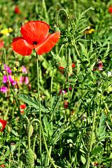 Flowers. (*Valentina.) Tags: flowers wild primavera nature canon eos spring details may natura dettagli fiori maggio d550