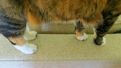 Kitty Feet (Gracie) 17 June 2016 9655Ri 9x16 (edgarandron - Busy!) Tags: cats cute cat gracie feline kitty kitties tabbies tbby patchedtabby