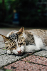 WIL_7796 (WillyYang) Tags: street cat 50mm kitten taiwan streetphotography taipei lazycat 50mmf12 50l 50mmf12l 5d3 5dmark3 canon5d3 canon5dmark3