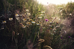 Soaking up the Sun (NoelleBuske) Tags: flowers light plants sun sunlight color nature beautiful sunshine golden spain nikon pretty outdoor hour wildflowers simple goldenhour noellebuske noellebuskephotography